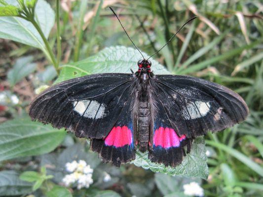 Grange aux papillons Virelles