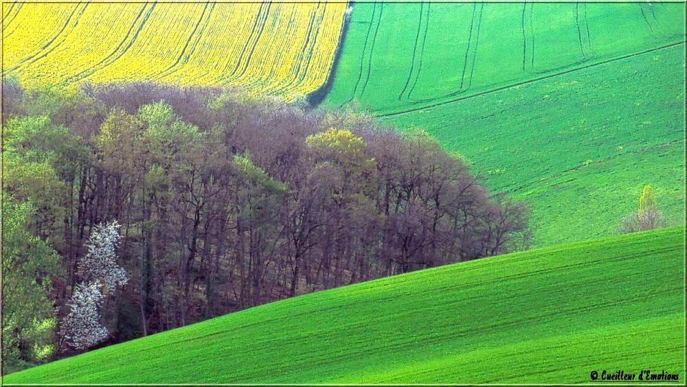 graphisme rural