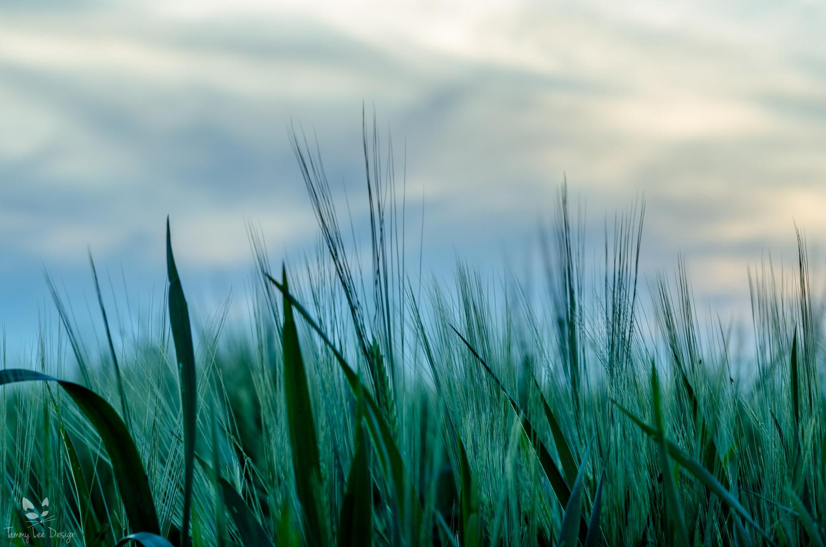 Gras am Abend