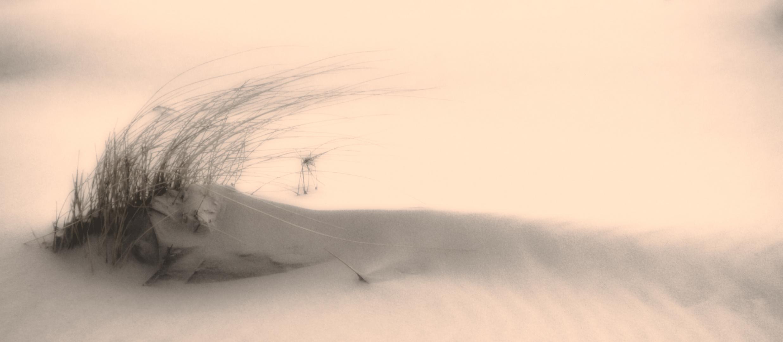 Gras auf kleiner Meeresdüne auf Sylt