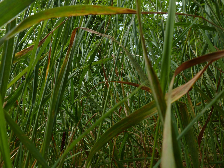 """Gras aus der """"Froschperspektive"""""""