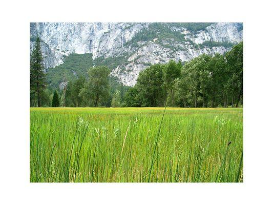 Gras-Blick