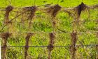Gras Gitter