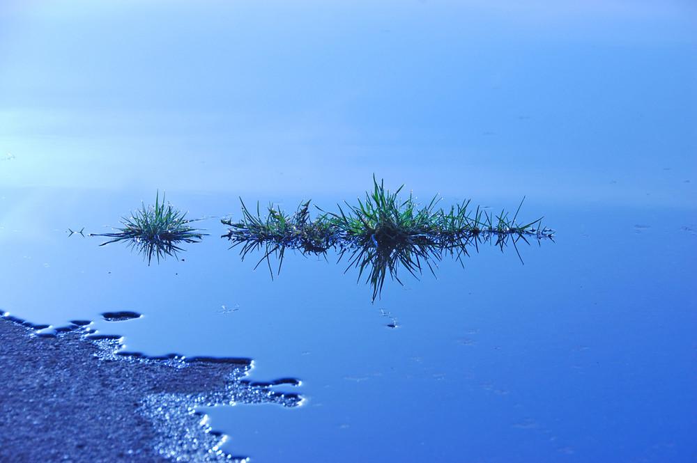 Gras im Wasser 2