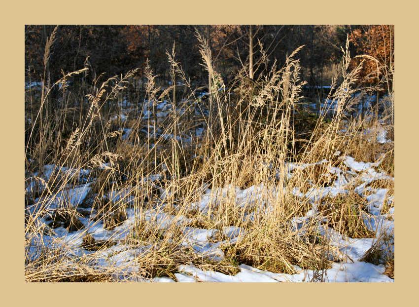 Gras lässt sich von Wintersonne verwöhnen