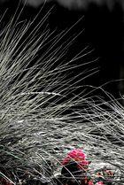 Gras mit Blume