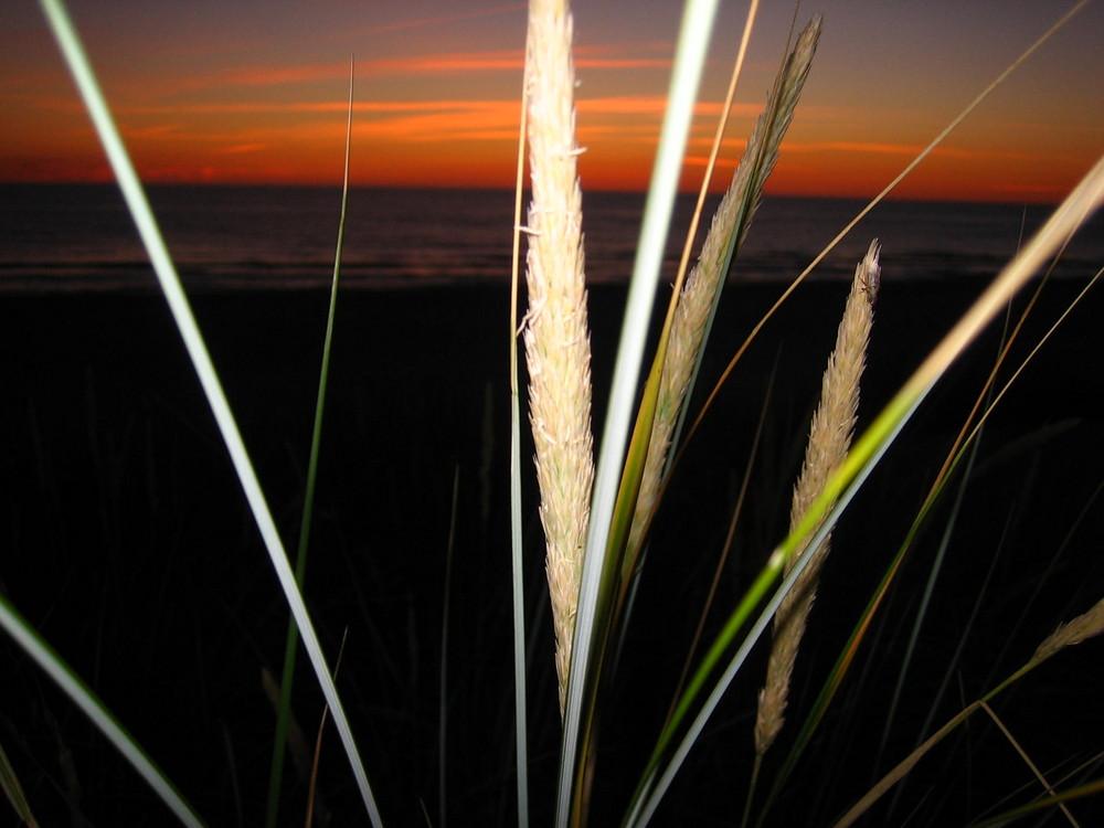 Gras mit rotem Himmel