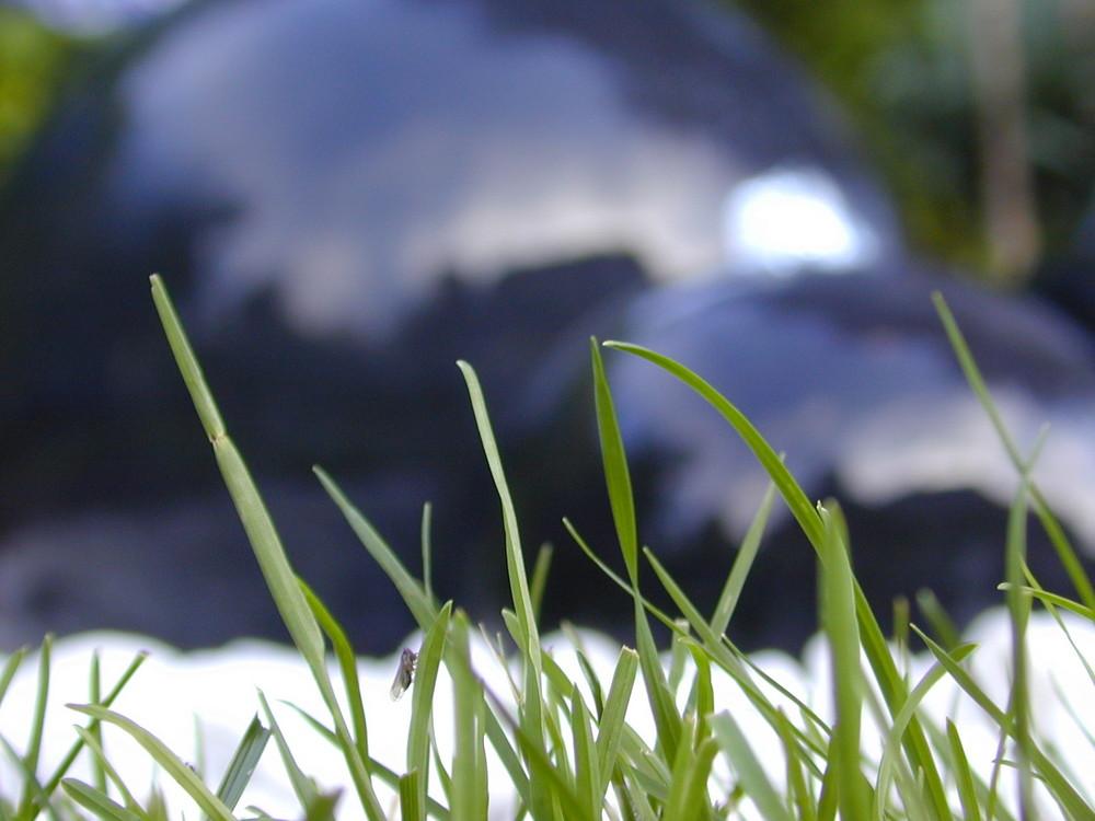 Gras mit Wasserkugeln