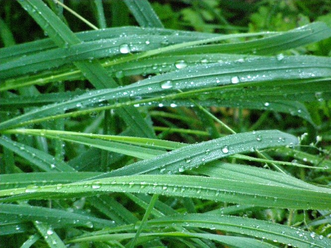 Gras nach einer Regennacht im August