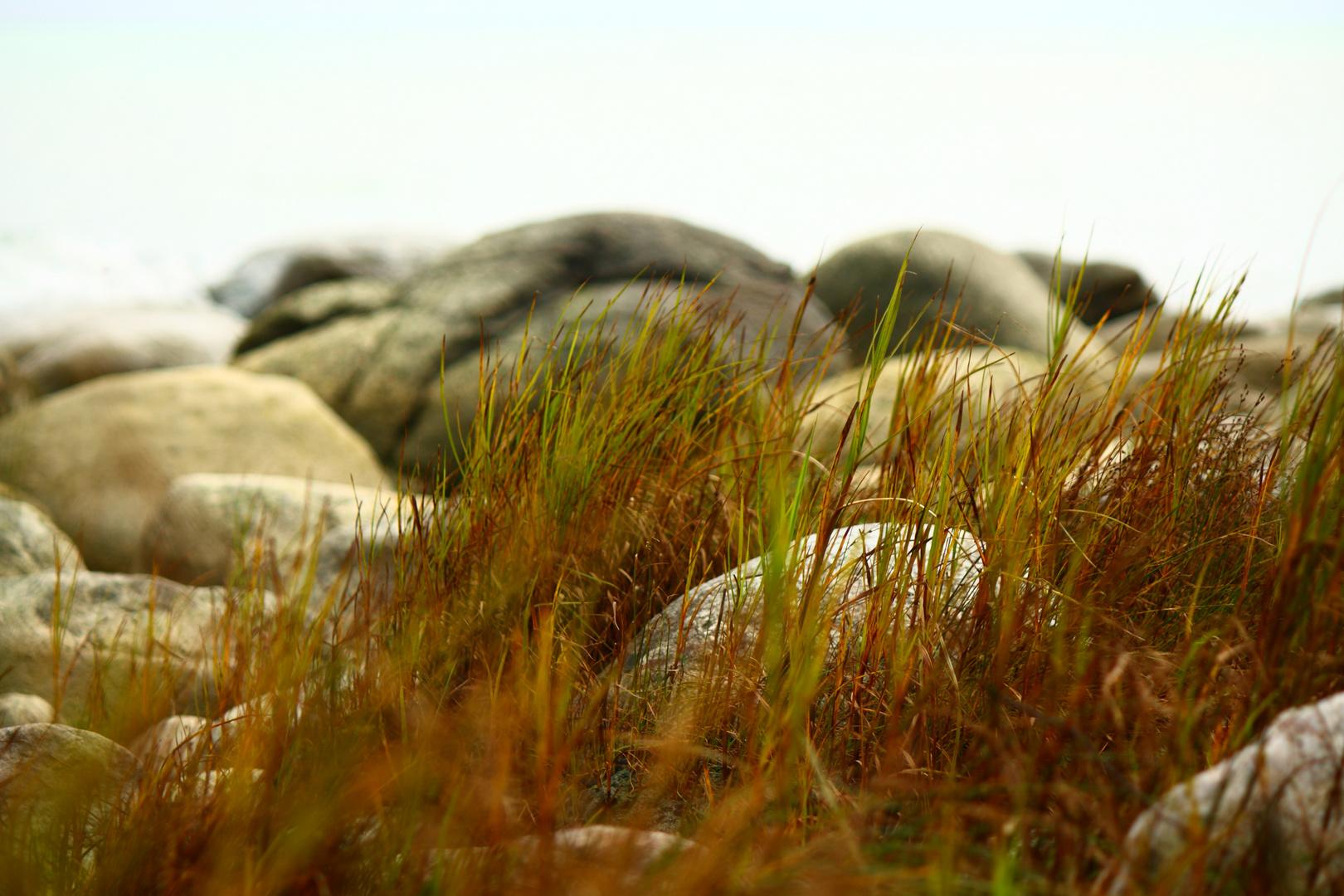 gras & rocks