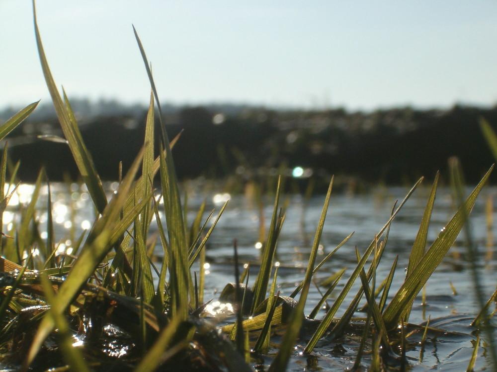 Gras un Wasser aus Ameisenperspektive...