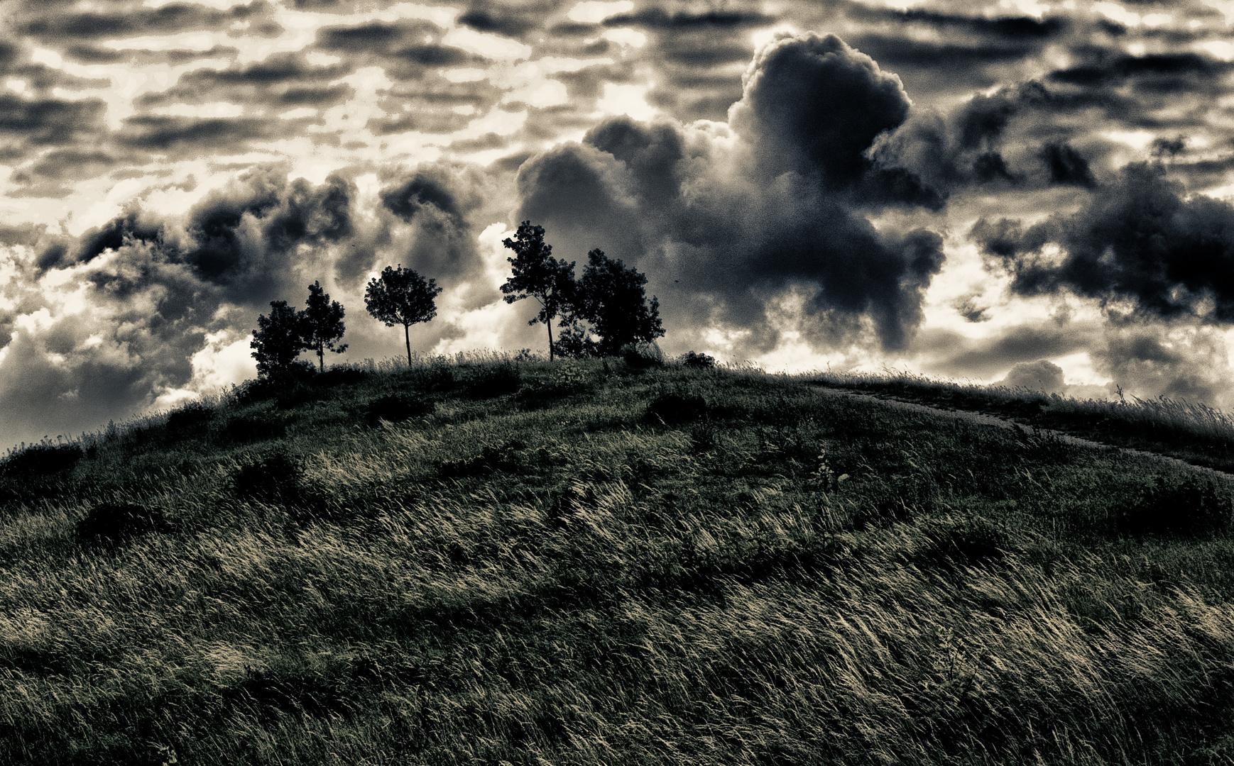 gras und bäume und wolken ...