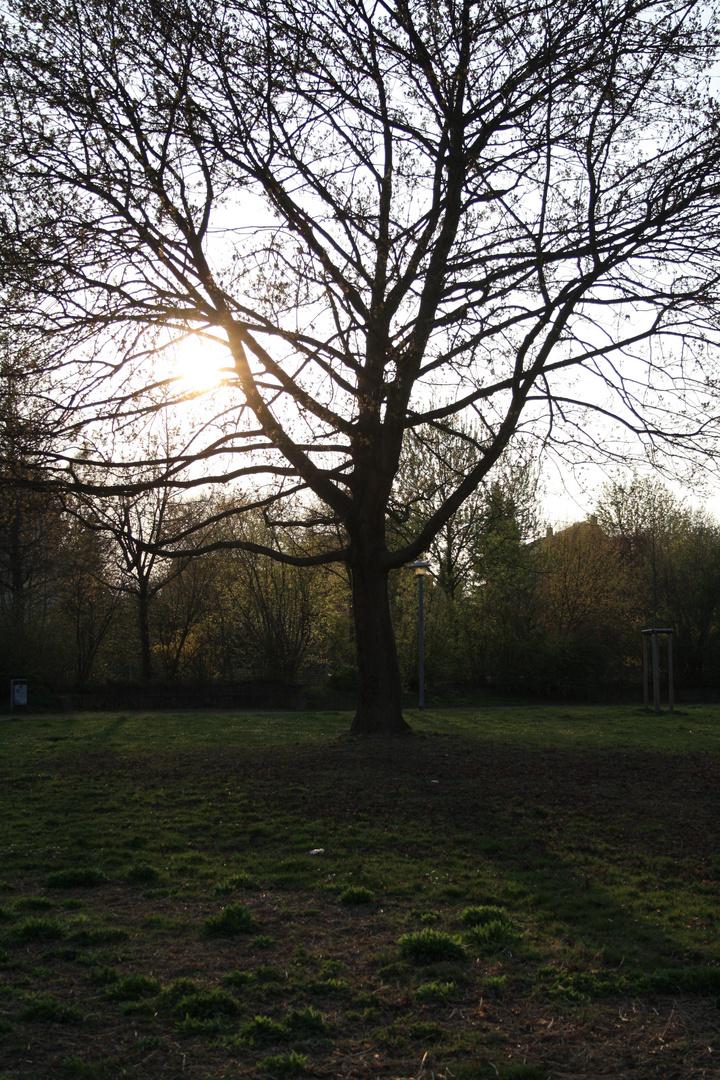 Gras und Baum brauchen Sonne, um gedeihen zu können; Des Menschen Herz braucht Freude.