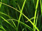 Gras (un)scharf