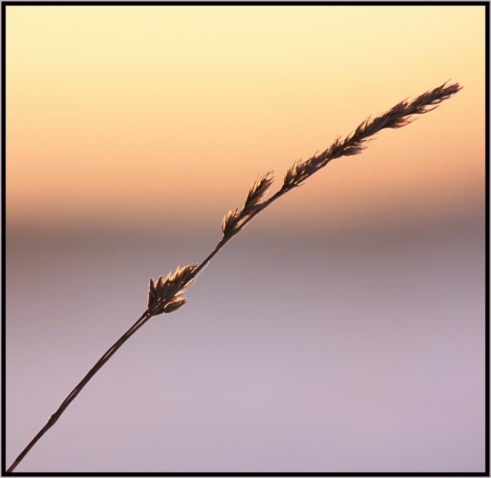 Gras von der Sonne berührt