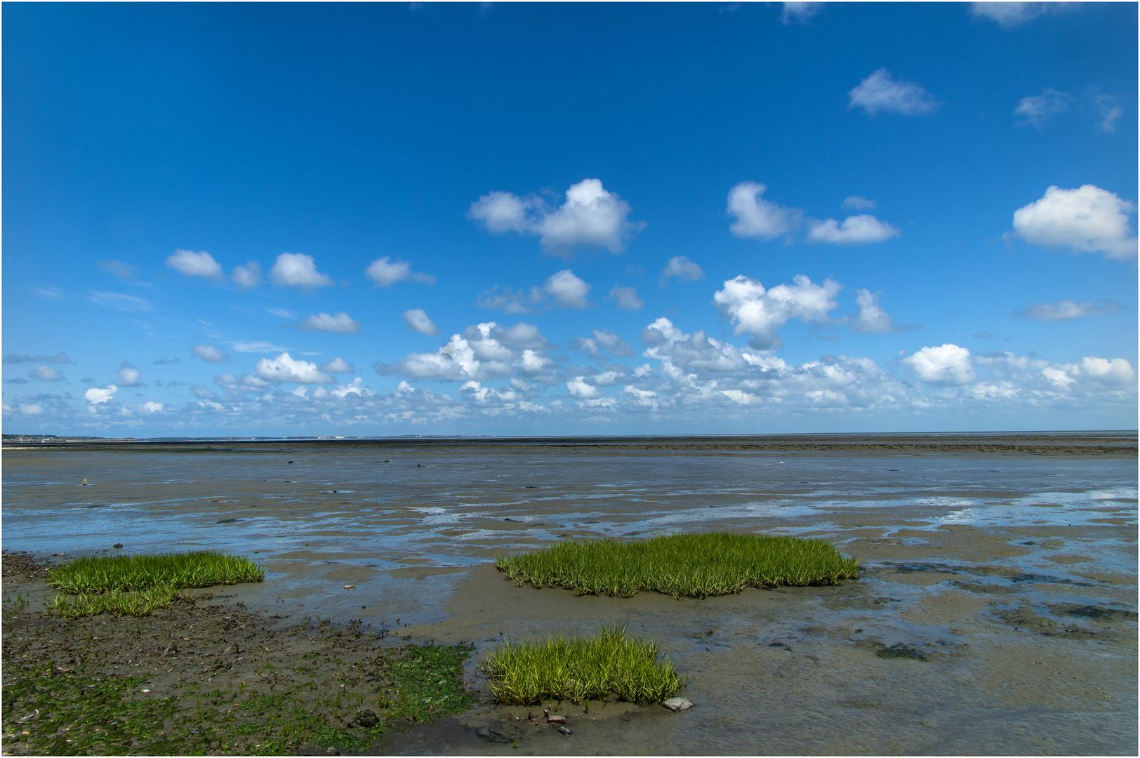 Grasbüschel bei Niedrigwasser