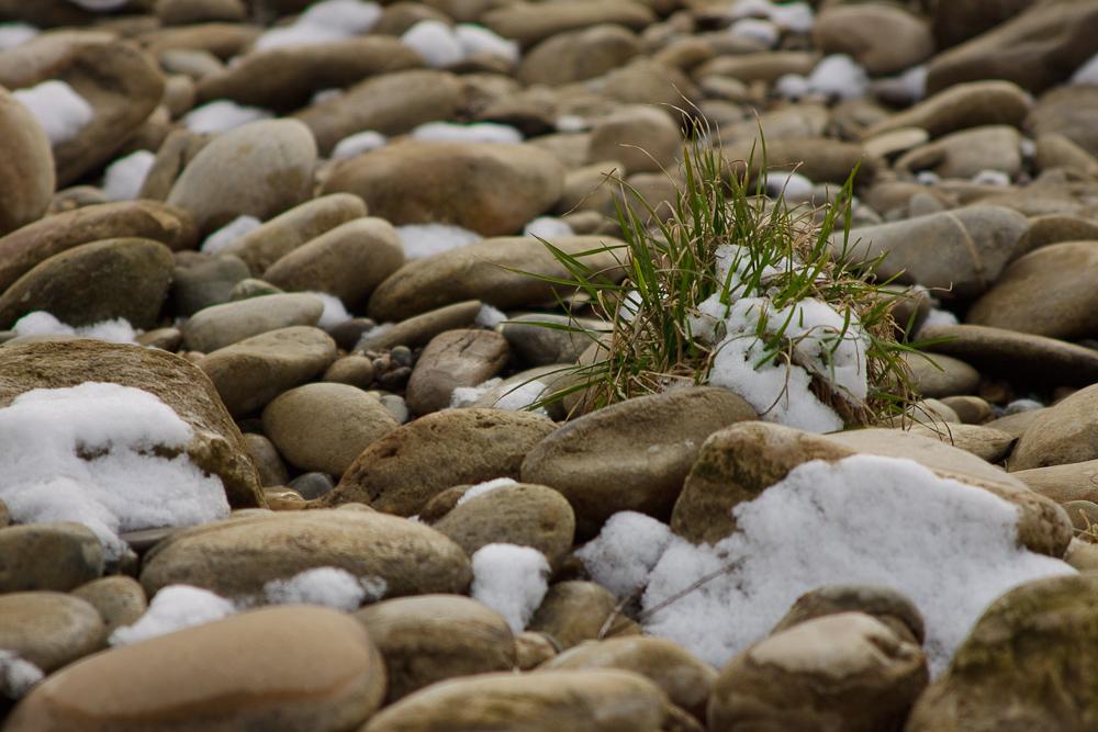 Grasbüschel in Flusslandschaft