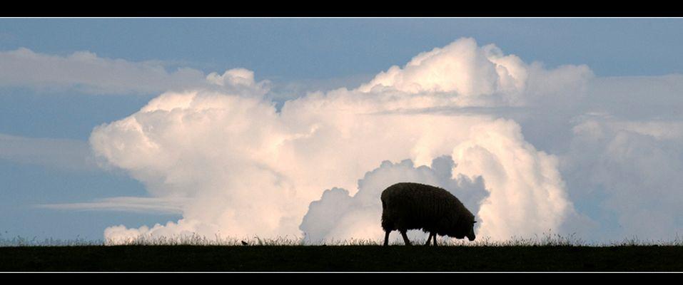 Grasendes Schaf vor einer Wolke # 2