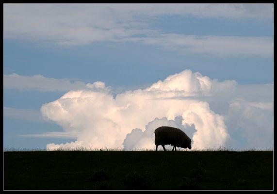 Grasendes Schaf vor einer Wolke