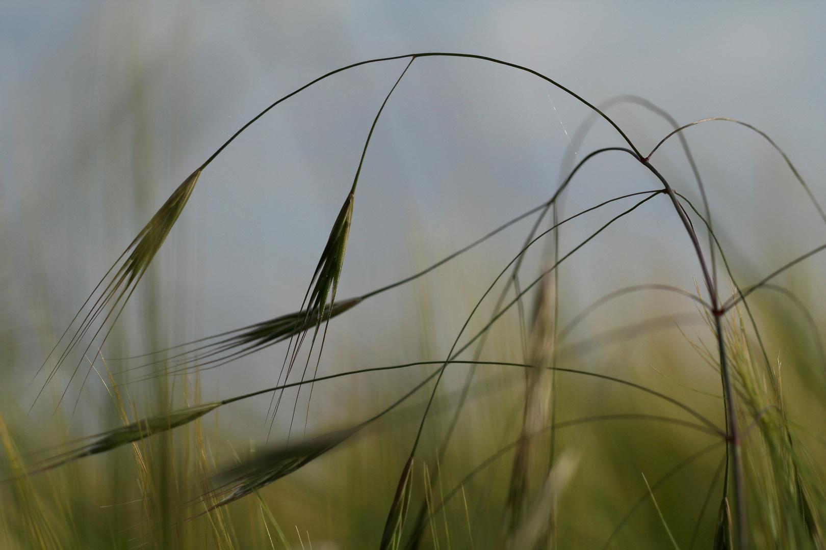 Gras:geflüster