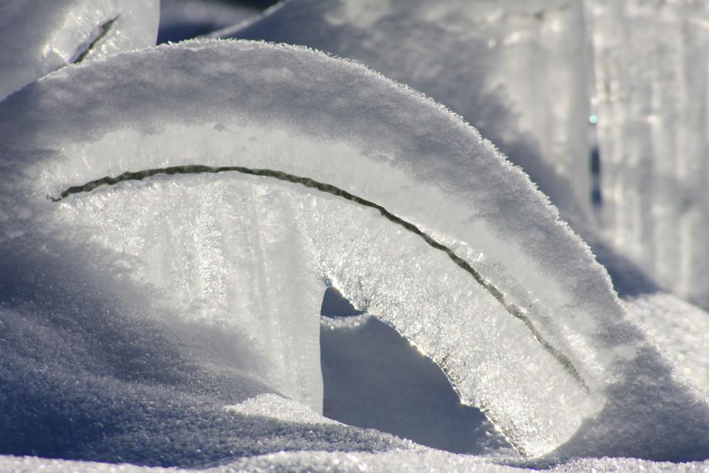 Grashalm in Eis