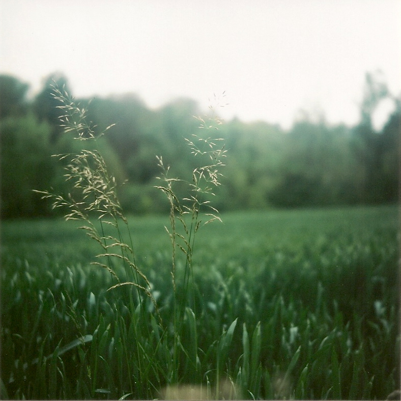 Grashalme im Feld