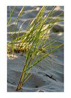 Grashalme im Sand