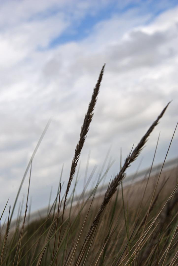 Grashalme im Wind