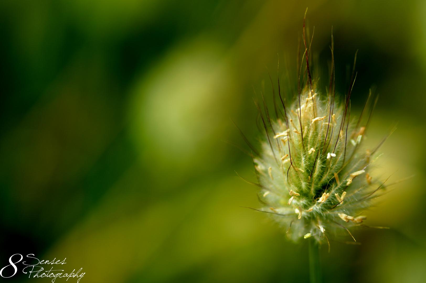 Graskunst der Natur
