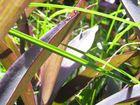 Gras_Pflanze Super Makro
