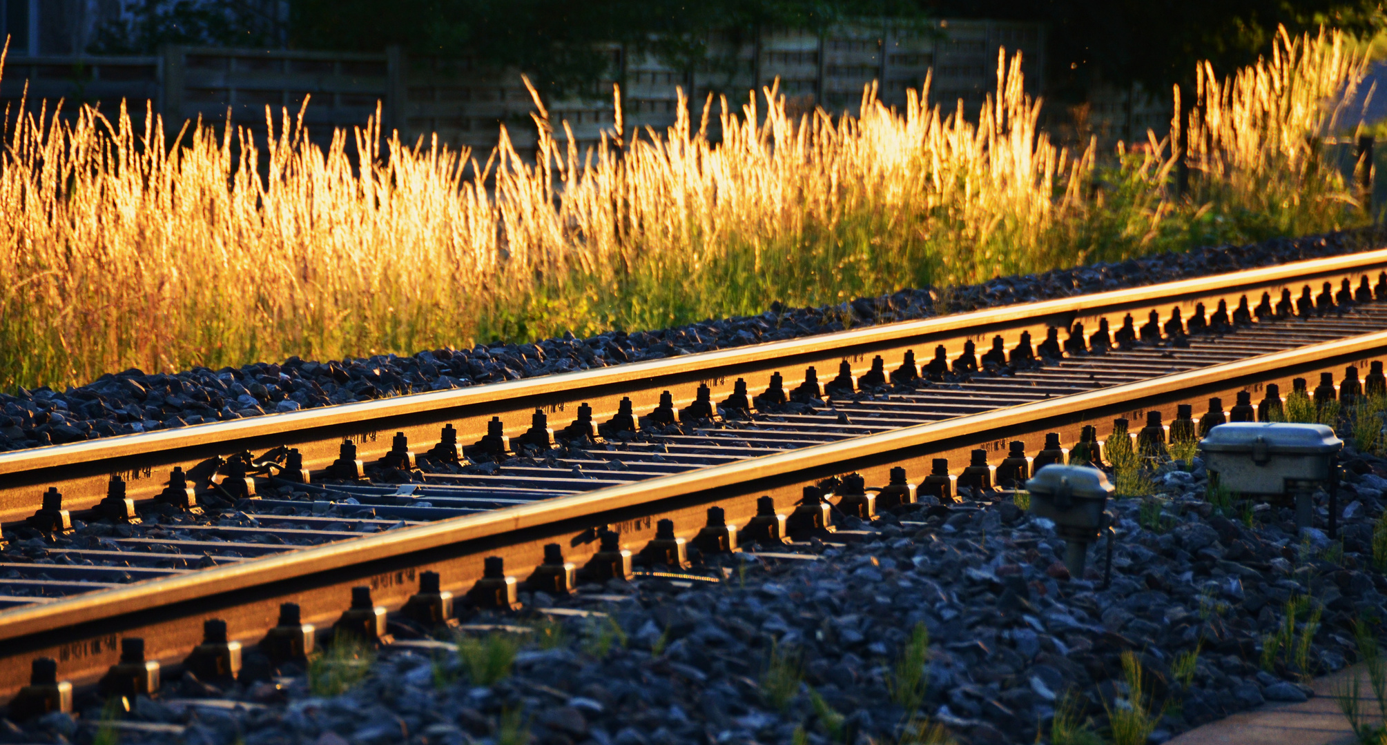 Grass behind the tracks