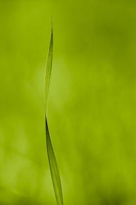 _grass_