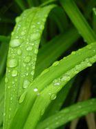 Grass =)