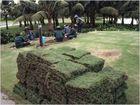 '' Grass Green ''