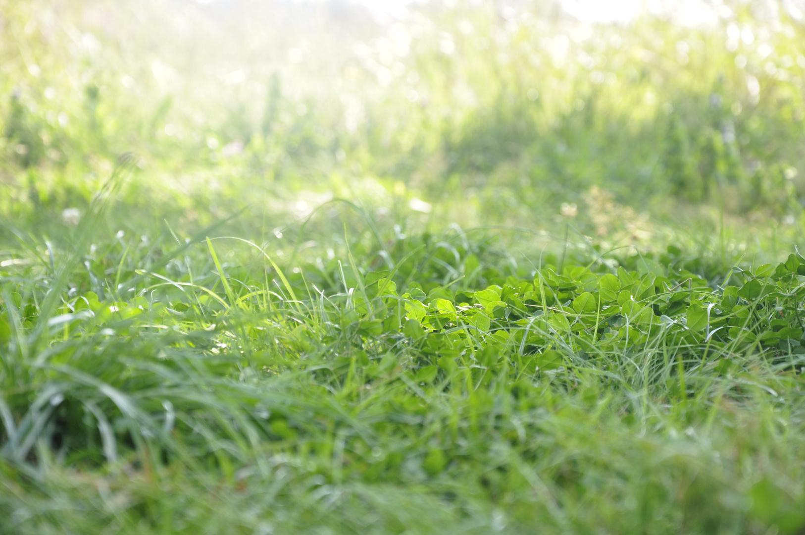 Grass grün