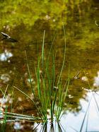Grass in der Quelle