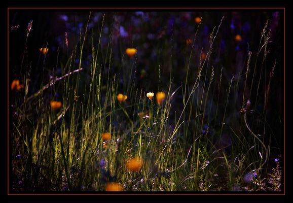 grass..geflüster