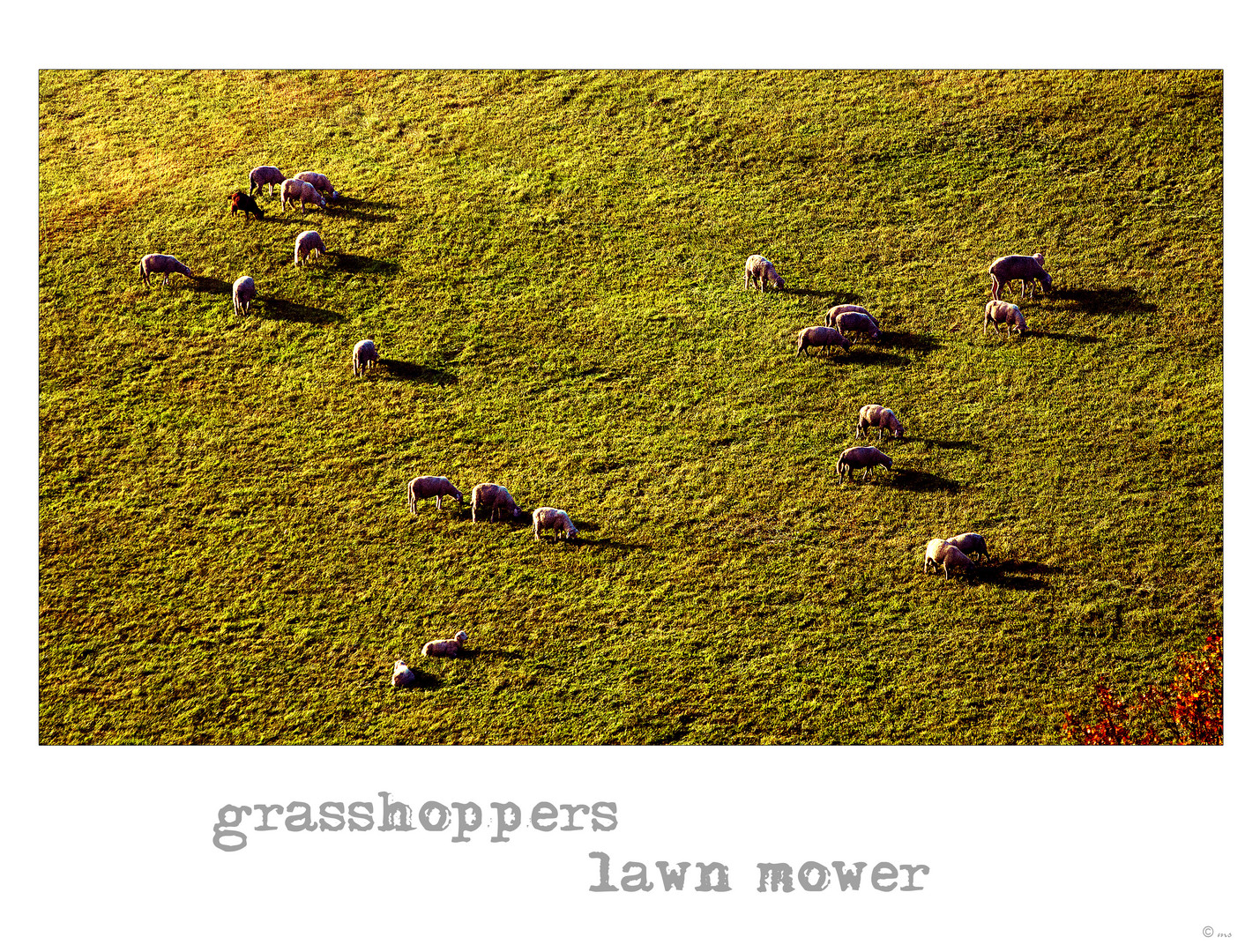 ~ grasshoppers lawn mower ~