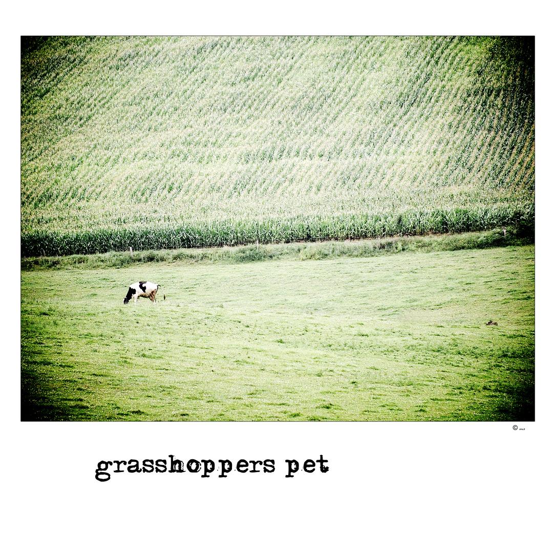 ~ grasshoppers pet ~