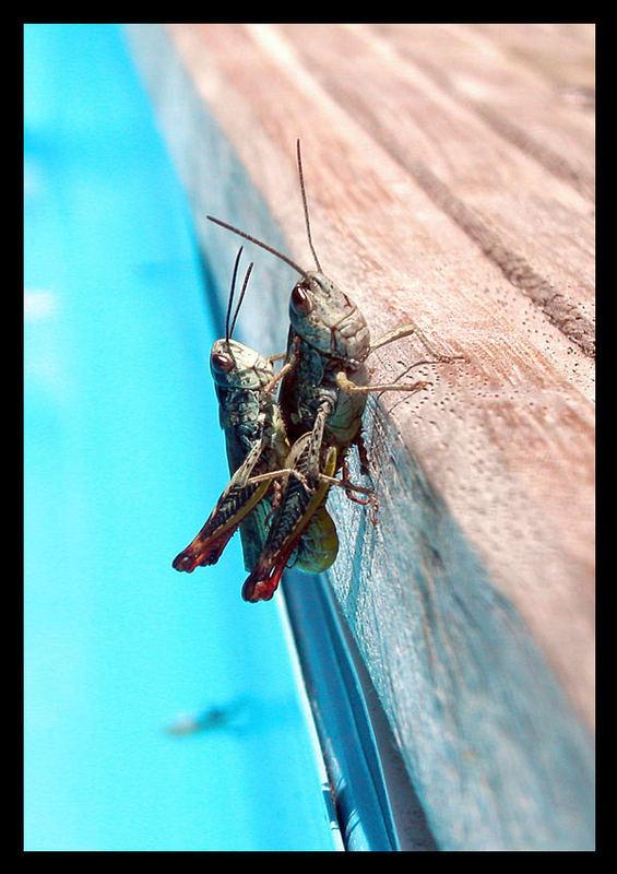 Grasshopping!
