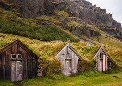 Grassodendächer