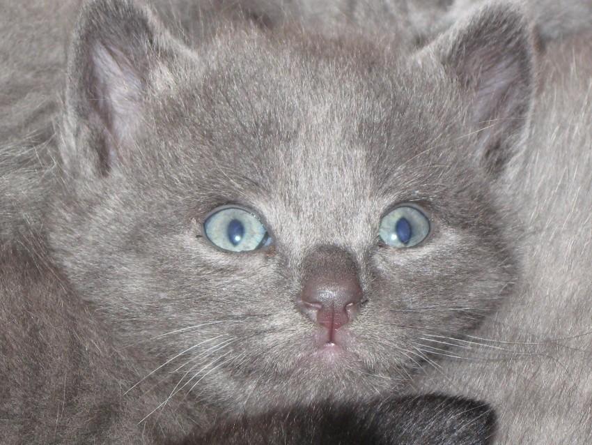 Grau mit blau