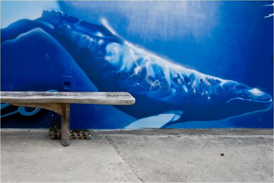 Graue Bank & Blauer Wal
