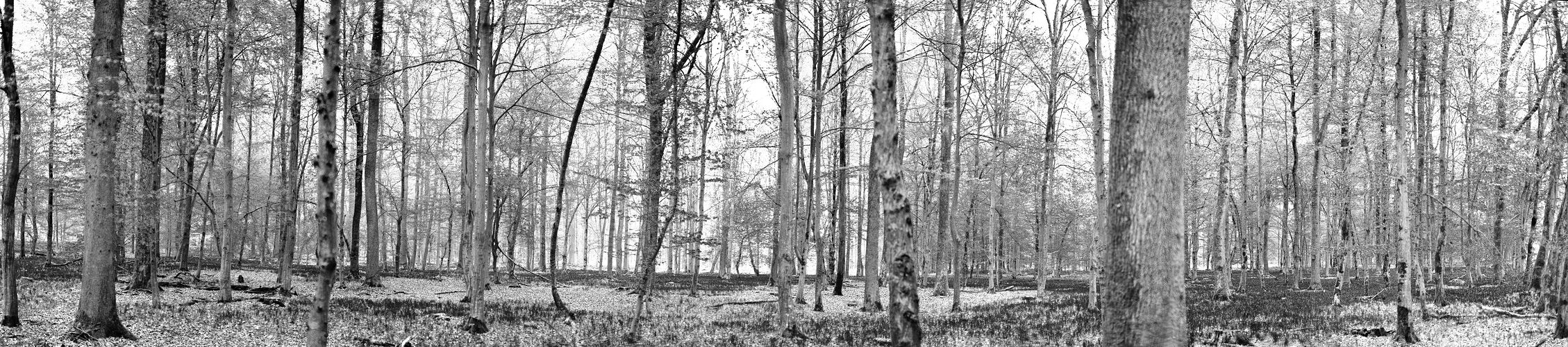 grauer Frühling im Maiwald