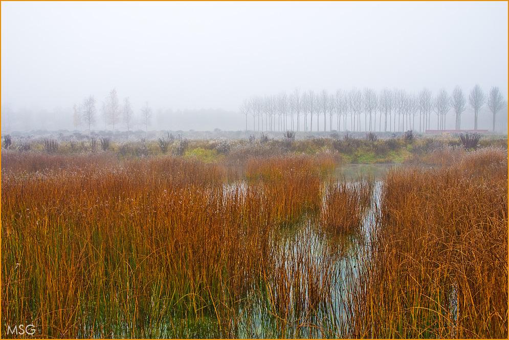 Grauer Herbst in warmen Farben