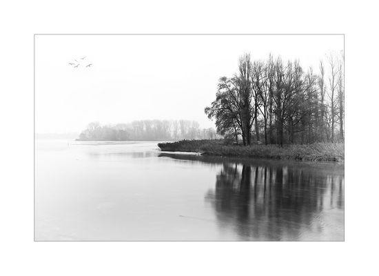 Grauer Morgen am Rhein
