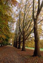 Grauer November :-) und noch einen Spaziergang- und noch einen- und noch...