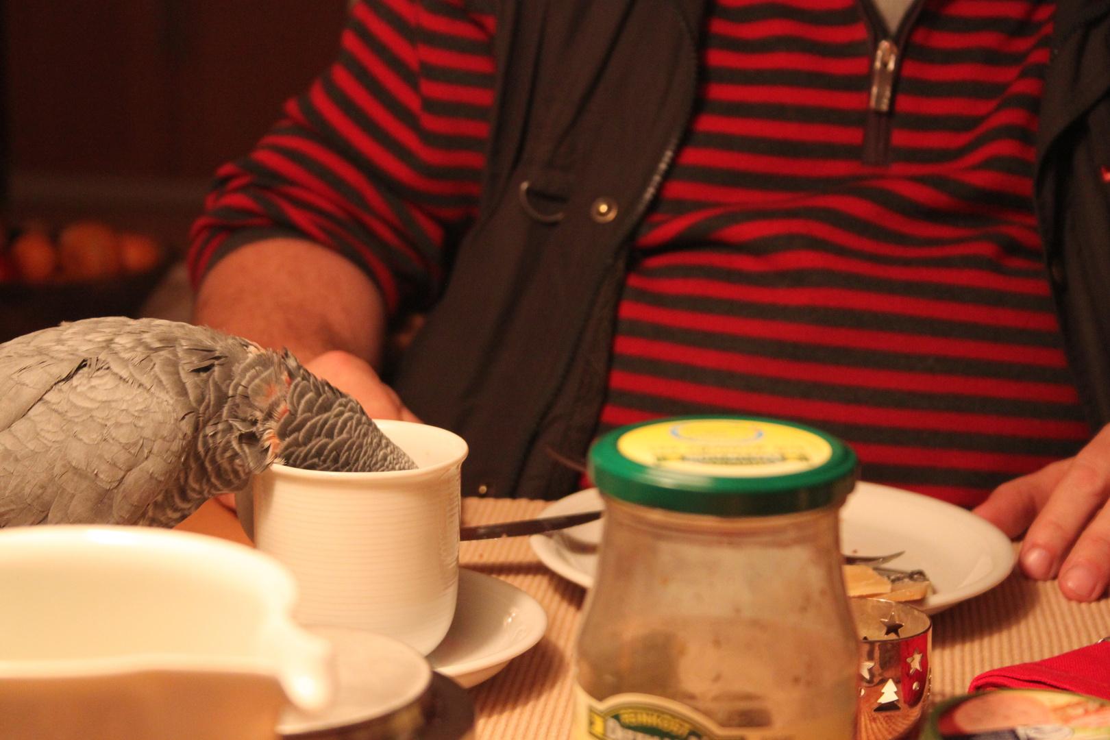 Graupapageien mögen schwarzen Tee!! :D
