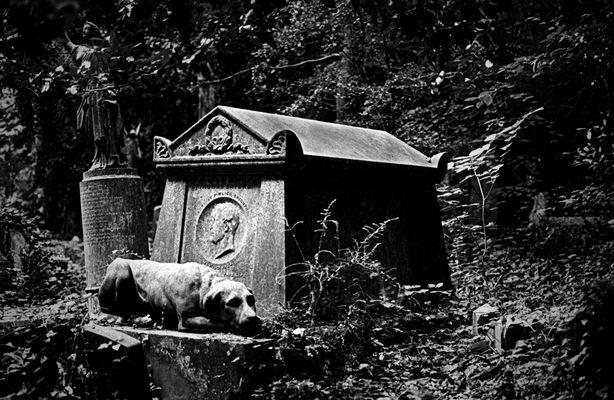 ~ Gravedog ~