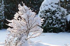 Grazie im Schnee